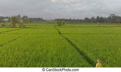 Aerial shot of a little boy walking through a beautiful rice field. Travel to South East Asia concept