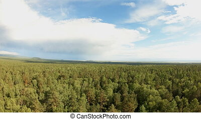 Aerial shot of a mixed forest. Bird's eye view