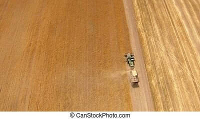 Aerial shot of a modern combine gathering ripe wheat on a...