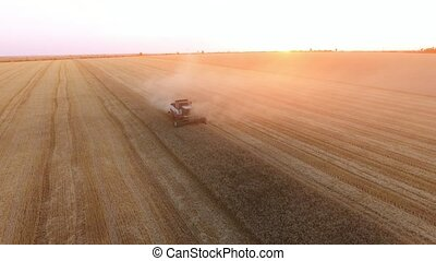 Aerial shot of a modern combine reaping wheat on a golden...