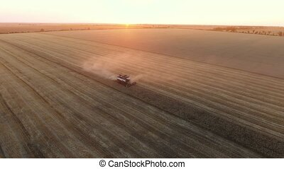 Aerial shot of a modern combine threshing wheat on a huge...