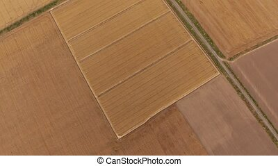 Aerial shot of a multistriped agricultural field at a golden sunset in summer