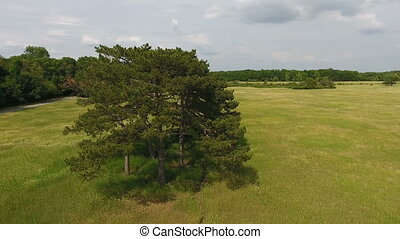 Aerial shot of a picturesque pine trees grove in a marvelous meadow in Ukraine