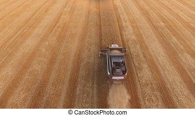 Aerial shot of a red and white combine reaping wheat on an...