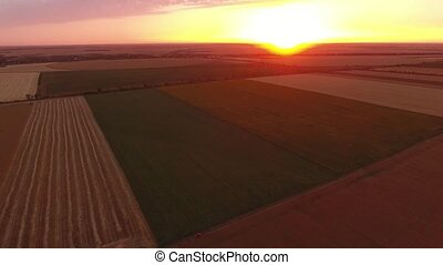 Aerial shot of a shining golden sunset over a multistriped wheat field in summer