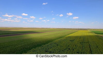 Aerial shot of agricultural parcels of different crops -...