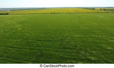 Aerial shot of an agricultural green  field in Eastern Europe in a sunny day