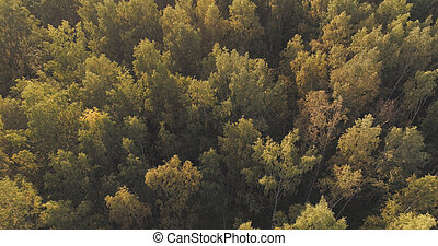 Aerial shot of autumn trees in forest