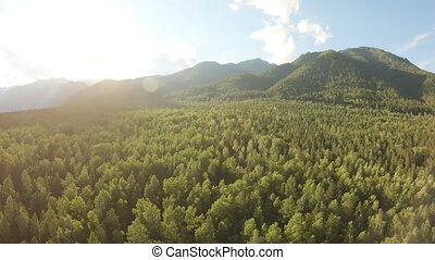 Aerial shot of beautiful mountain landscape. Drone rise up above the forest