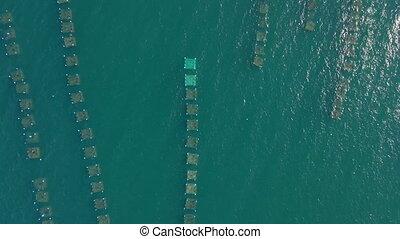 Aerial shot of big sea farms in the open sea in tropics. Marine farming concept.