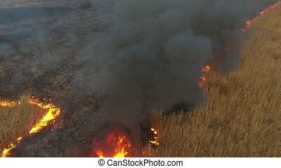 Aerial shot of cane and sedge marshes covered with flame and...