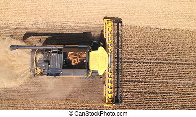 Aerial shot of combine gathering rye or wheat crop. Flying over harvester working in farmland at sunny day. Harvesting and agronomy concept. Top view Close up.