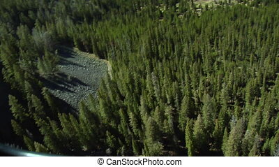Aerial shot of dense pine forest below, waterfall
