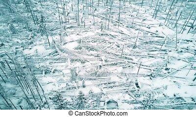 Aerial shot of fallen broken trees in the forest in winter