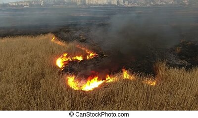 Aerial shot of flaming cane and sedge marshes in the Dnipro river basin in spring