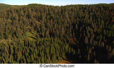 aerial shot of forest and mountains