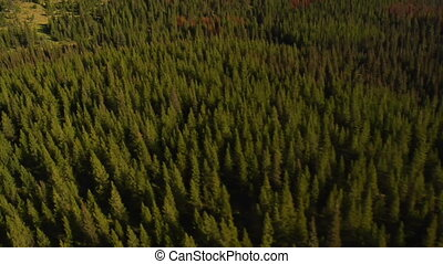 aerial shot of forest and mountains with dead trees