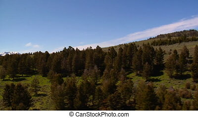 Aerial shot of grassy mountain meadows and pine trees