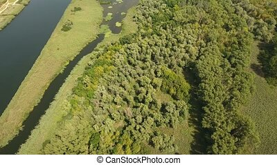 Aerial shot of green rotten wetland from cane, sedge at the...