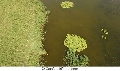 Aerial shot of green wetland from cane, reed, bulrush at the...