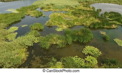 Aerial shot of green wetland patches at the Black sea shoal...