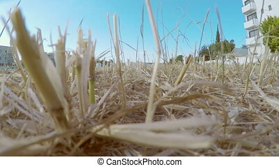 """""""Aerial shot of harvested field filmed with quadrocopter. Video shot with drone"""""""