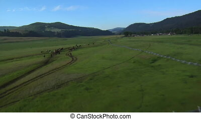 aerial shot of horses running in Green Valley