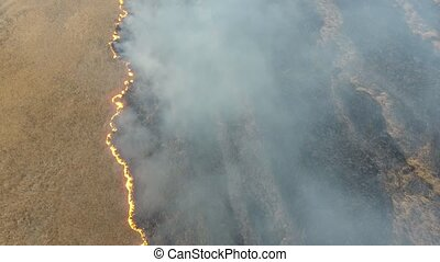 Aerial shot of huge cane wetland covered with orange flame...