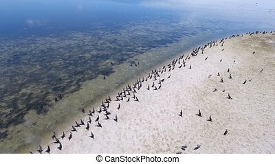 Aerial shot of hundreds of cormorants sitting on a sandy beach of Dzharylhach