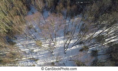 Aerial shot of mixed forest in winter