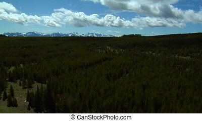 Aerial shot of Montana pine forests and sistant mountains