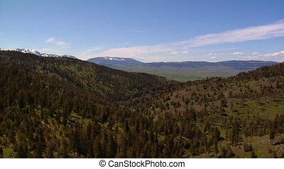 Aerial shot of mountain pine trees
