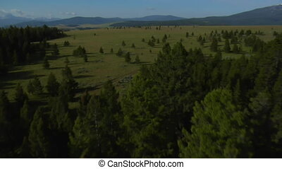 aerial shot of open rangeland with forest and mountains