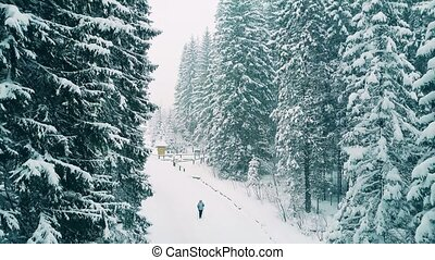 Aerial shot of people hiking in forest in the snow - Aerial...