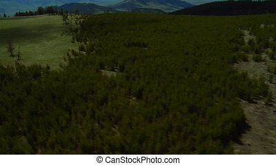 Aerial shot of pine forest and then open grassy meadow