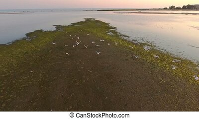 Aerial shot of seagulls flying over the spit of Dzharylhach island at sunset
