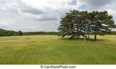 Aerial shot of several high old trees in a wonderful green meadow in Ukraine