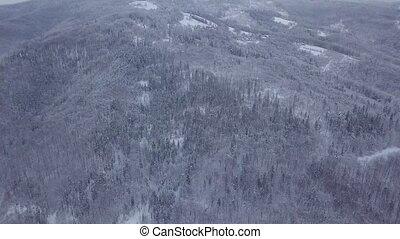Aerial shot of snowy woods