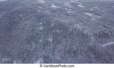 Aerial shot of snowy woods - View from drone of endless...