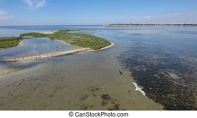 Aerial shot of the Black Sea island with flocks of black cormorants and seagulls