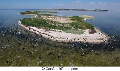 Aerial shot of the Black Sea shoal at Dzharylhach island with whirling seaguls