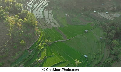 Aerial shot of the marvelous rice teraces in mountains during sunset