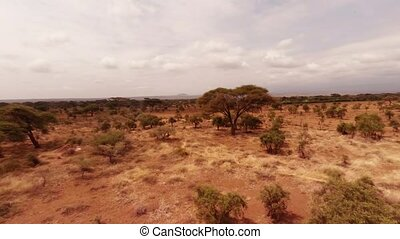 Aerial shot of the savannah. - Savanna Africa Grasslands The...