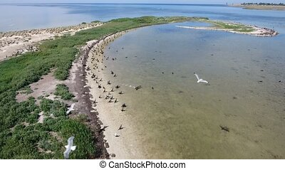 Aerial shot of white seagulls and black cormorants living on...