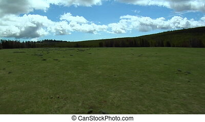 Aerial shot over grassy Montana meadow and pine tree forest