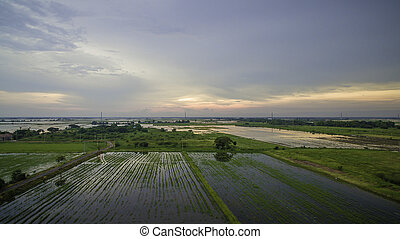 Aerial shot : Rice field in the evening after harvest in Thailand.