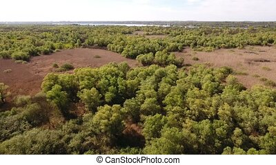 Aerial shot with dense forest and nice skyscape - Aerial...