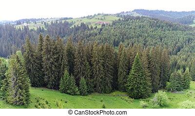 aerial skød, i, grønnes skov