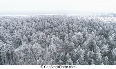 AERIAL. Sliding drone shot of frosted white trees in cold...