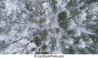 AERIAL. Sliding overhead drone shot of frosted white trees...